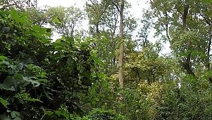 Boraka Reserve, the land pertaining to the village of Sarnitsa